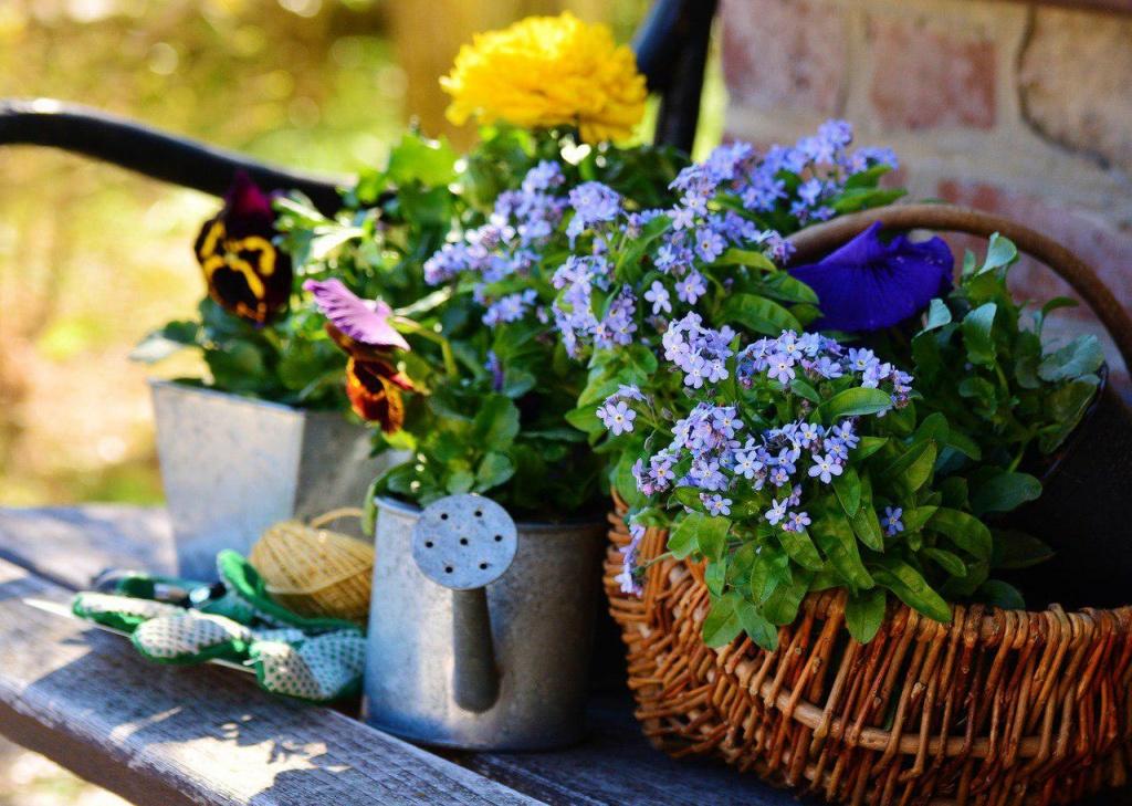 В Щукине проведут лекции для садоводов-любителей