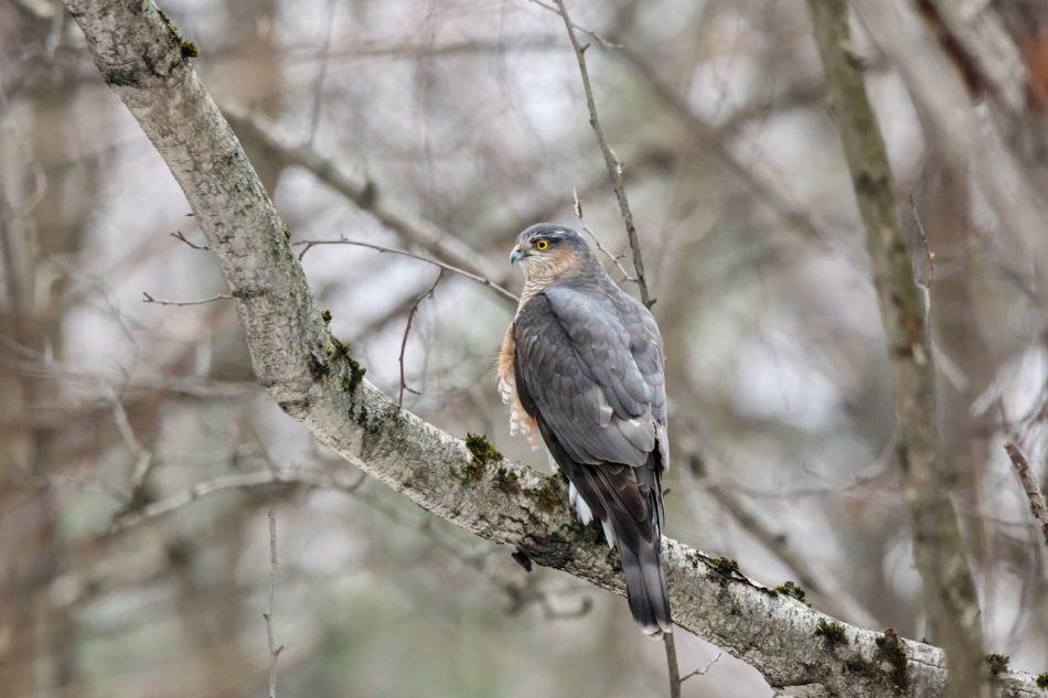 Редкое фото сделал любитель природы в парке «Покровское-Стрешнево»